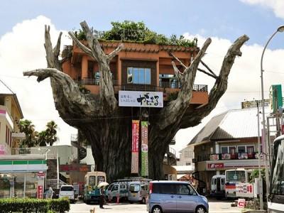 Độc đáo nhà hàng Naha Harbor Nhật Bản lơ lửng trên cây